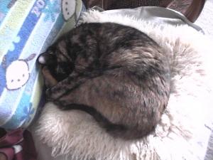 Mint sleep