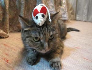 人生猫三昧